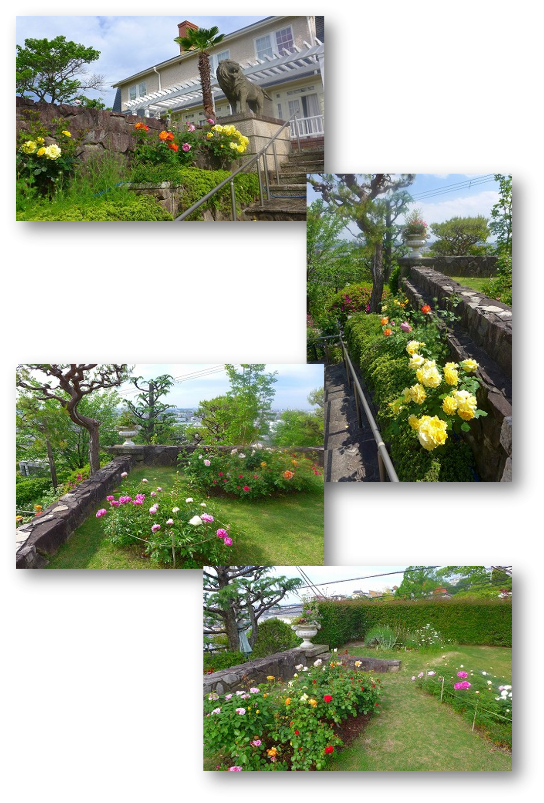 TMH20200515_GardenFlowers2.png